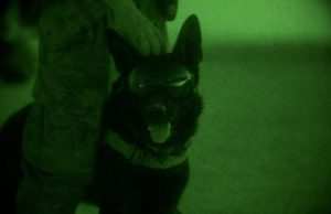 military working dog goggles
