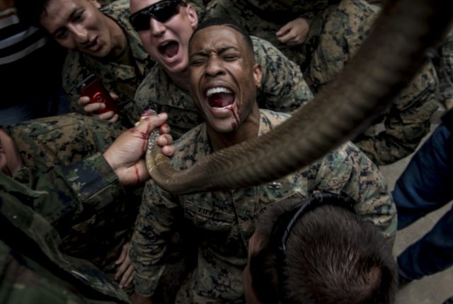 Exercise Cobra Gold tradition of drinking snake blood